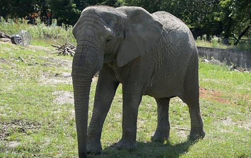 cbd elephant